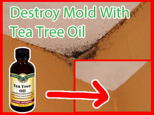 Source Public Domain Tea Tree Oil Is A Fabulous Natural Remedy For Treating And Preventing Mold In The Home